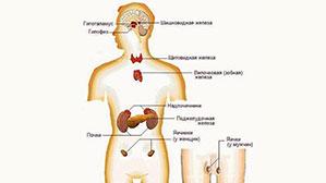 endocrynolog2